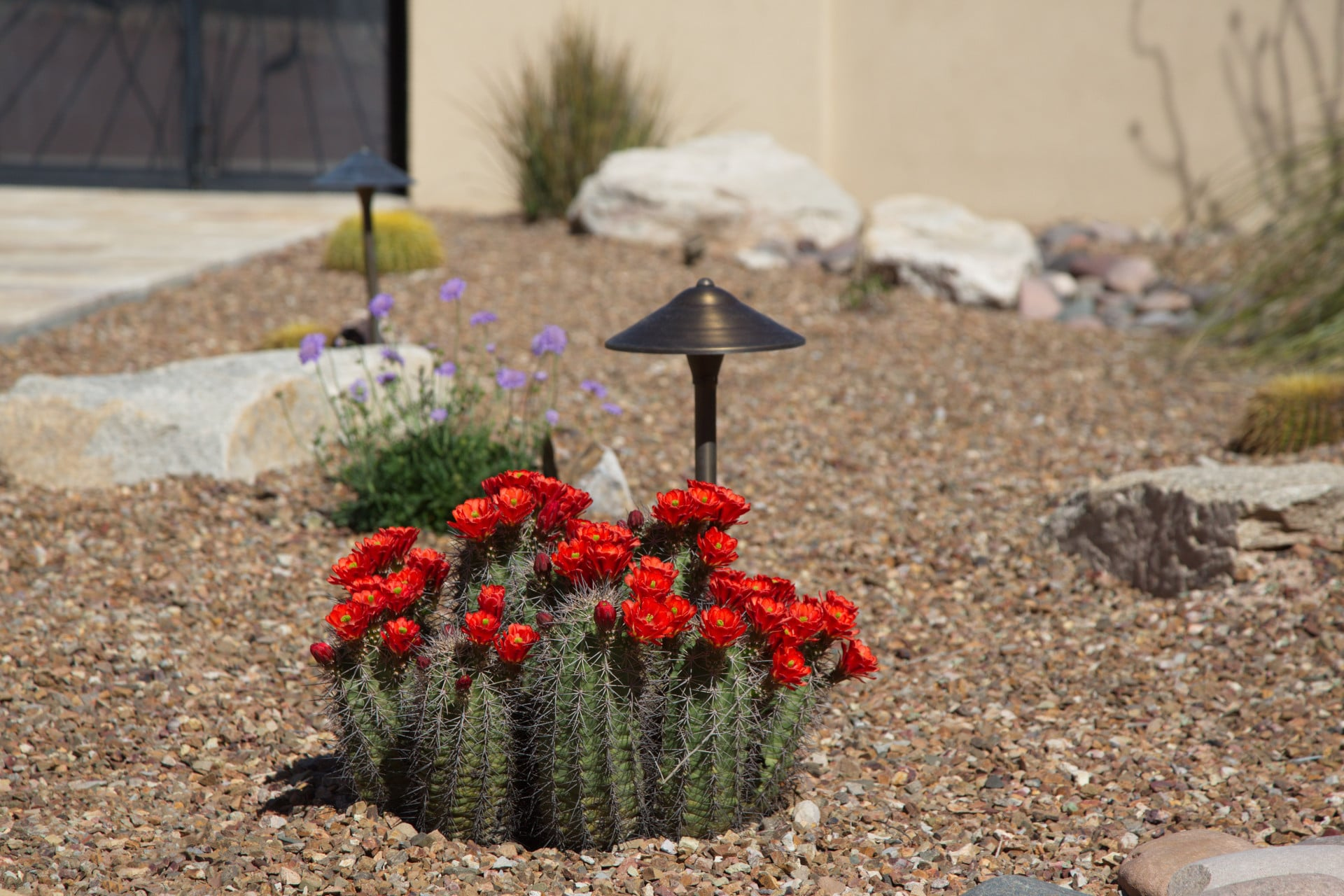 Landscaping rocks and a flowering cactus