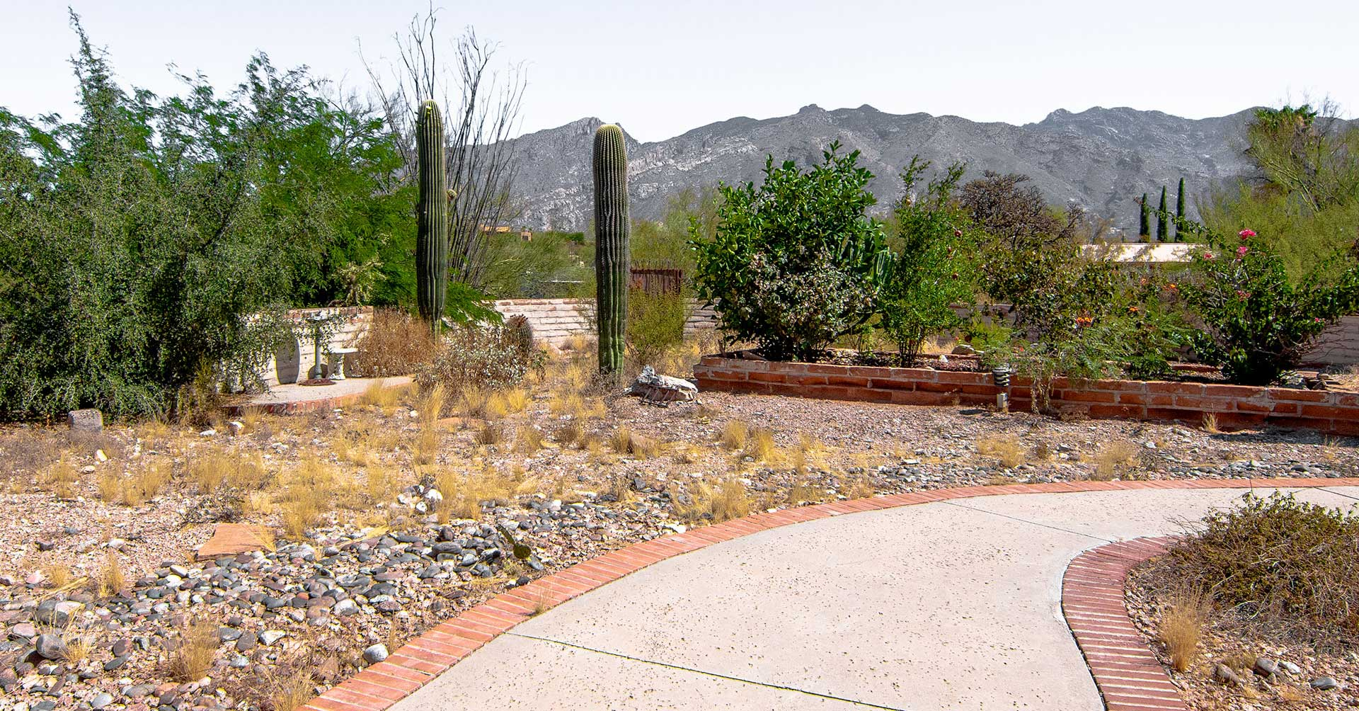 An unkempt backyard with weeds and untrimmed trees before landscaping.