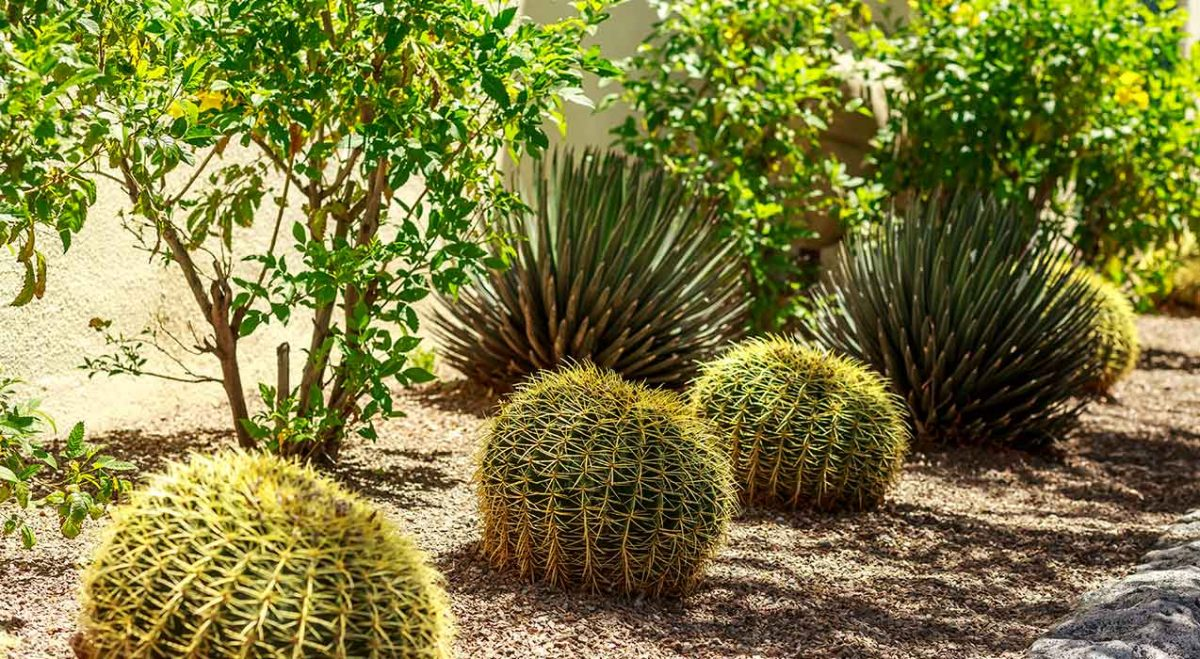 Top 3 Ideas for Desert Landscaping