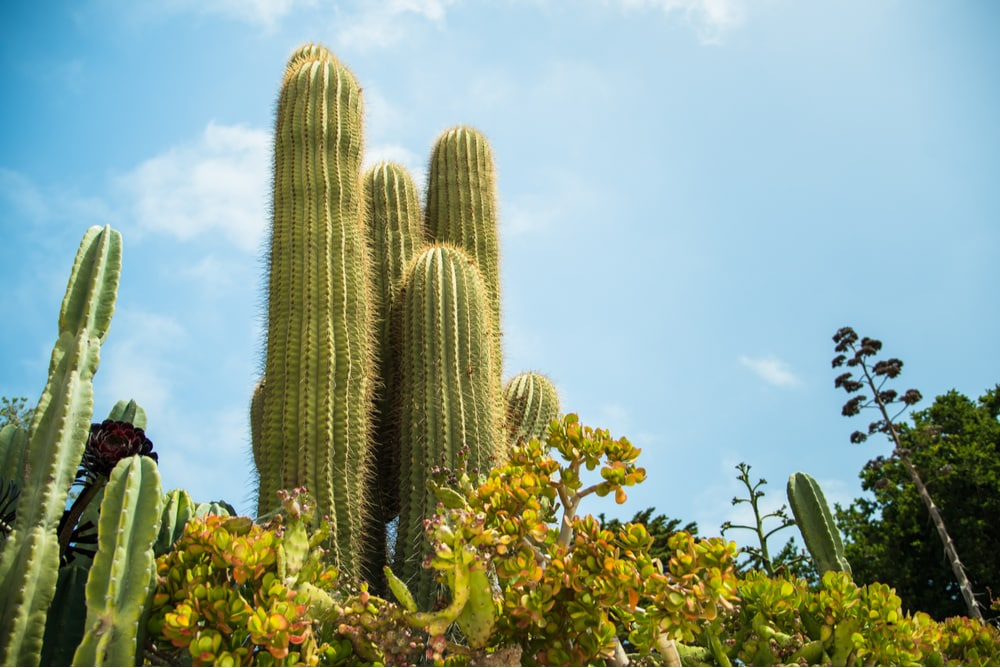 The Best Plants for Your Desert Landscape